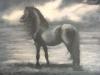 liberte du cheval acrylique 60 x 80 cm