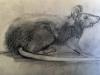 Manou rat dans le poulailler 24 x 13.5 crayon sur papier