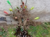 Garden art, projet du Group'artuel de l'atelier de Bena